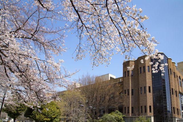 東京大学構内 桜の風景